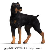 Rottweiler - Rottweiler Dog. 3d Rendering With Clipping Path And Shadow Over White
