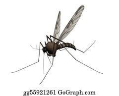 Mosquito - Mosquito