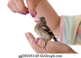 Bird-Feeder - In Caring Hands