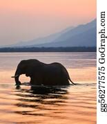 Blue-Elephant - Elephant On The River Zambezi.