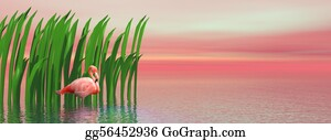 Flamingo - Flamingo And Waterplants By Sunset