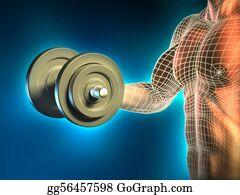 Biceps - Body Building