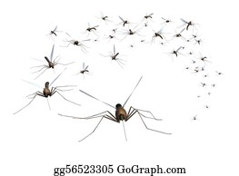 Stinging-Insect - Mosquito Swarm