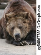 Bear-Paw - Brown Or Grizzly Bear
