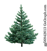 Fir-Tree - Fir Tree Isolated On White