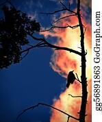 Birds-On-The-Tree-Silhouette - Burn..