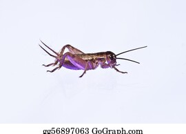 Pool-Party - Purple Retro Party Bug