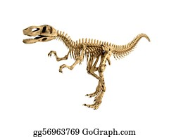 Fossil - T-Rex Skeleton Isolated