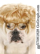 Wig - Female Bulldog
