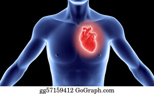 Conduction - Human Body With Heart