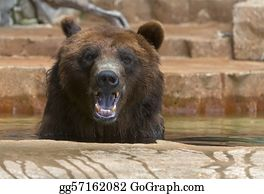 Sense-Of-Smell - Grizzly Bear