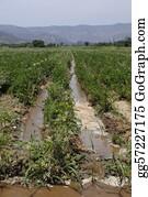 Plantation - Landscape Of Field