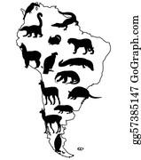 Alpaca - Animals South America