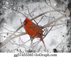 Cardinal-Bird - Red Cardinal Illustration