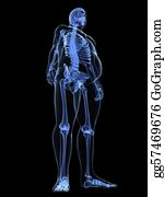 Overweight - Overweight Male - Skeleton