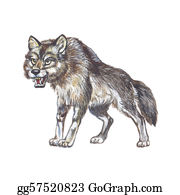 Growl - Gray Wolf