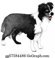 Border-Collie - Collie Dog Illustration