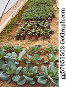 Cultivation - Vegetables Cultivation