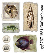 Seashell - Shell & Fish Collage
