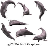 Acrobatic - Dolphins