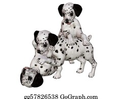 Growl - Dalmatian Puppies