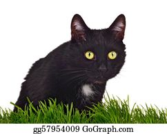 Growl - Black Green-Eyed Cat Behind Grass Isolated