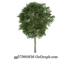 Leaf-And-Oxygen - Ash-Tree Or Fraxinus