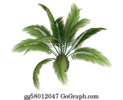 Leaf-And-Oxygen - Canary Date Palm Or Phoenix Canariensis