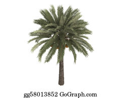 Leaf-And-Oxygen - Date Palm Or Phoenix Dactylifera