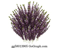 Leaf-And-Oxygen - Heather Or Calluna