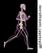 Overweight - Medical Skeleton Of An Overweight Woman Running
