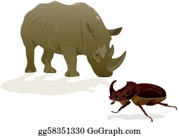 Rhinoceros-Beetle - Rhino And Rhino Beetle