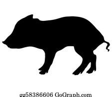 Boar - Young Wild Boar