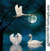 Swan - Swans In The Moonlight