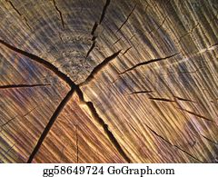 Trunk - Wood Background