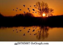 Birds-On-The-Tree-Silhouette - Evening Ducks