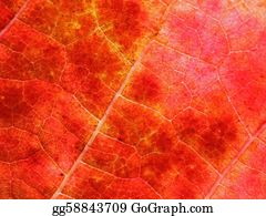 Grape-Leaf - Abstract Autumnal Background