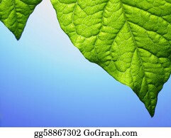 Plant-Life-Cycle - This Is Leafs Background. It Is Theme Of Seasons.