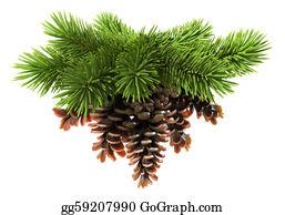 Fir-Tree - Fir Tree With Pine-Cones