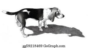 Barking-Dog - Pencil Drawing Of A Beagle Dog