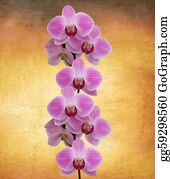 Orchid-Flower - Perfect Orchid