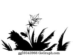 Herbs - Vector Drawing