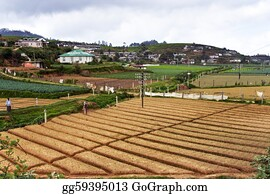 Cultivation - Cultivation Of Grain In The Highlands Of Sri Lanka