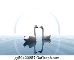 Swan - Two Swans In Water