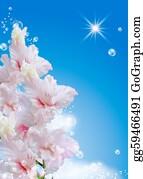 Gladioli - Gladiolus Against The Sky