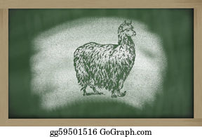 Alpaca -  Sketch Of Alpaca On Blackboard (vicugna Pacos)