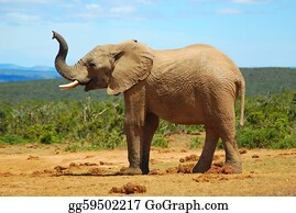 Sense-Of-Smell - African Elephant Smelling