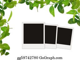 Vine - Green Leaves Frame And Tree Blank Photos