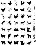 Poultry - Icon Animals