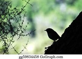Birds-On-The-Tree-Silhouette - Stewart Island Robin Bird